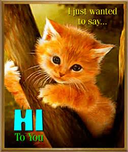 cat friends hawaii 1000 images about gifs 6 on la web gifs and