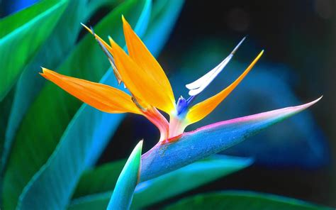 Escape Winter With These Tropical Flowers  Grower Direct