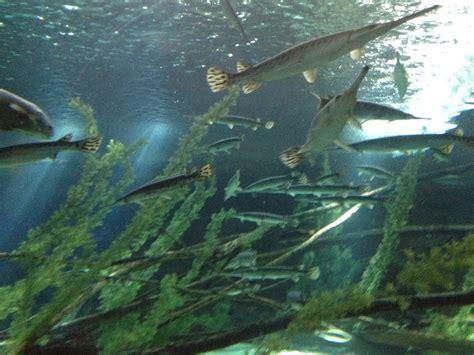 sea minnesota aquarium wordless wednesday sea minnesota aquarium sealifemnhorsing around in la
