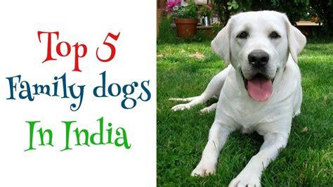 best dog breeds in the world
