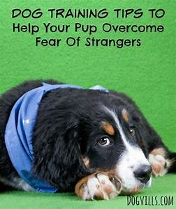 219 best dog training tips images on pinterest dog With dog behavior training tips