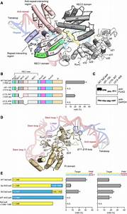 Crystal Structure Of Cas9 In Complex With Guide Rna And