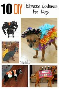 10 diy costumes for dogs