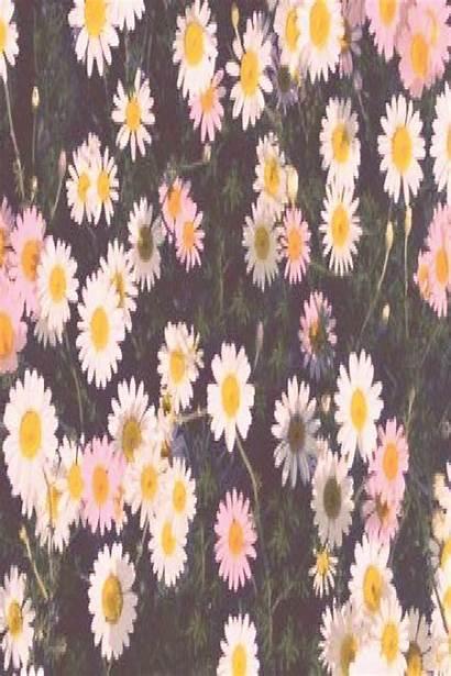 Aesthetic Macbook Desktop Wallpapers Super Daisy Among
