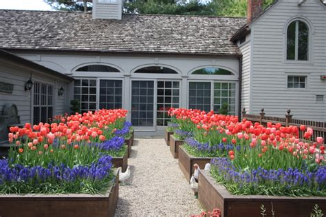 tulips  planting beds traditional landscape