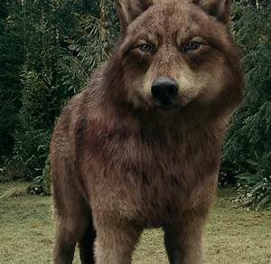 Image - Eclipse 14 wolf jake 2.png | Twilight Saga Wiki ...