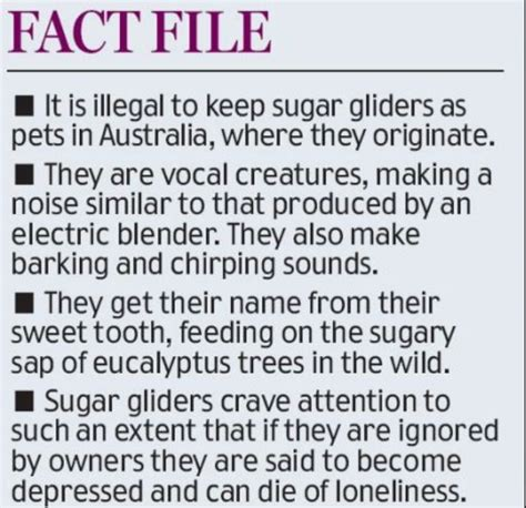 sugar glider facts 17 best images about sugar gliders