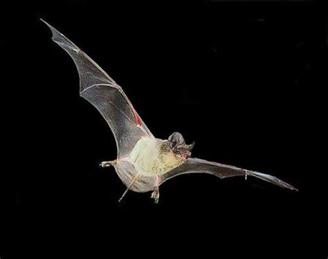 bats and birds