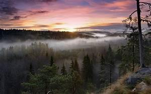 Nature, Landscapes, Trees, Forest, Fog, Mist, Morning