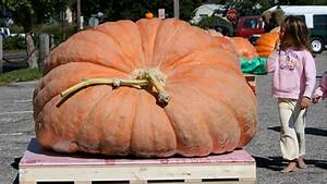 Here, U2019s, How, Giant, Pumpkins, Get, So, Big