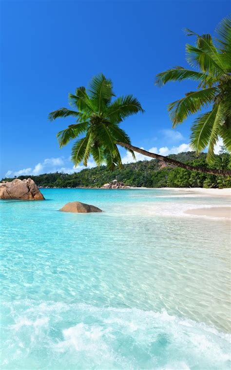 tropical beach live wallpaper app ranking and store data