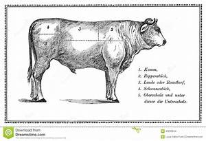 Food  Old Beef Chart Stock Illustration