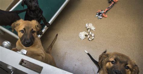 sandy    utah city  ban  sale  dogs cats