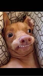 Weird Dog Faces