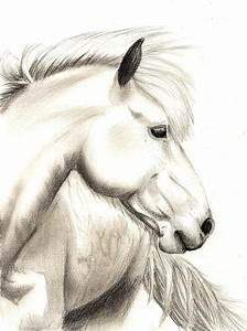 Realistic Horse Sketch by jennypip on DeviantArt