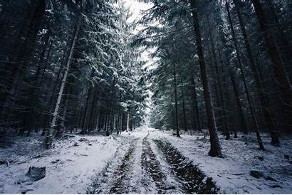 Forest Winter Norway Snow Trees Road Johannes