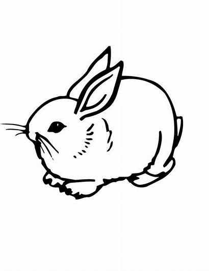 Bunny Coloring Realistic Pages Sweet Bunnies Printable