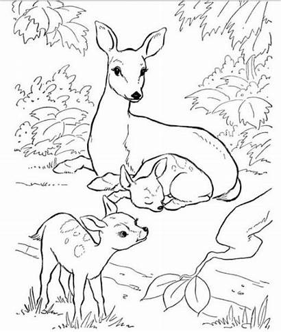 Coloring Nature Animals Pages Backyard Books Colouring