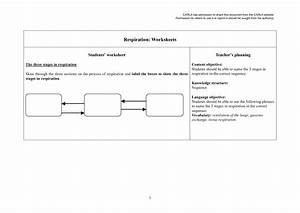 12 Best Images Of Photosynthesis Cycle Worksheet