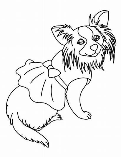 Chihuahua Coloring Dog Puppy Adult Own Netart