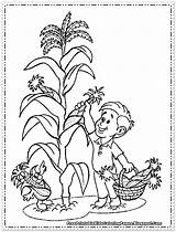 Corn Coloring Printable Wheat Picking Cornfield Thanksgiving Sheets Fruit Drawing Colouring Cob Sheet Vegetables Candy Maiz Plant Getcolorings Imagenes Drawings sketch template
