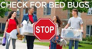 Tips from the pros to avoid bed bugs at college news and for Bed bugs in college