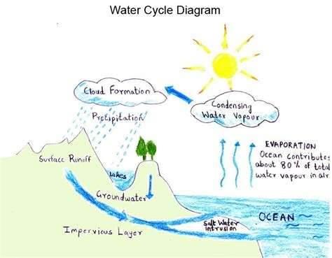 Diagram For Science Fair Project by Water Cycle Project Ideas Water Cycle Diagram Water
