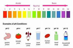 A Lake Has A Low Ph  Is It Acidic Or Basic  Would Fish Be