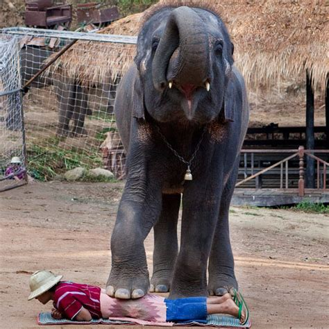 elephant massage   bored  insane thai language