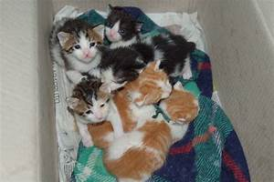 14 gattini abbandonati nella spazzatura in Liguria Petpassion Blog
