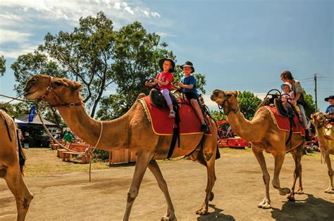 Camel Ride On Hire In Hyderabad For Event / Birthday Party ...