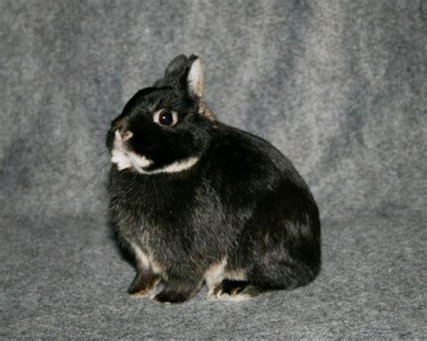 cassell prairie bunnies home