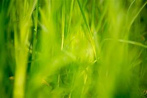 12 Beautiful Green Grass Field Hd Wallpapers Fields ...