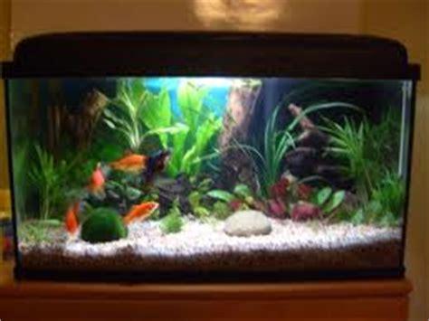 plante pour aquarium d eau froide le de moune1