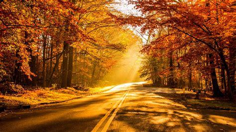 Hd Autumn Background by Wallpaper Fall Foliage Autumn Hd 4k Nature 3012