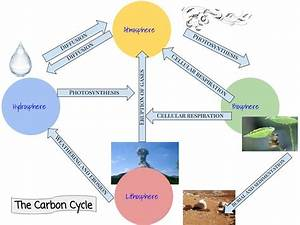 Carbon Cycle Diagram Photosynthesis And Cellular