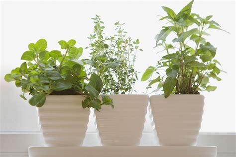 start   windowsill herb garden  homes