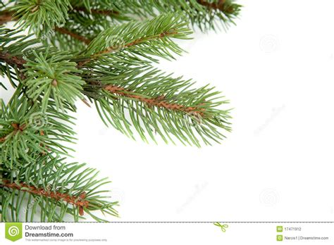 christmas tree branches border over white stock photo
