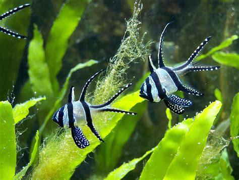 fish wallpaper  screensavers  images