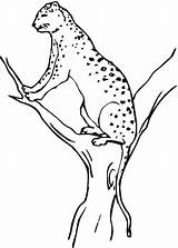 Coloring Cheetah Pages Printable Animal Tree Realistic Toddlers Under Concepts Animals Bestcoloringpagesforkids Worksheet Line Drawing Kindergarten Coloringpages101 Site Guide Worksheets sketch template