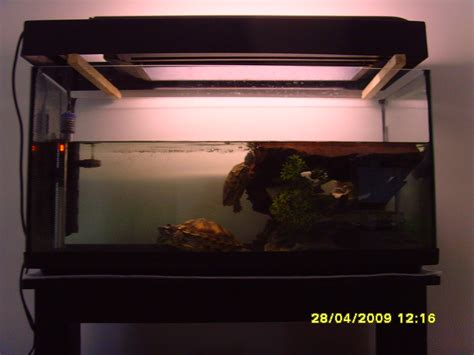 aquarium tortue d eau douce aquarium pour tortue d eau douce galerie la tortue facile