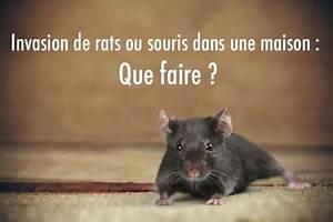 Comment Se Débarrasser Des Souris Dans Une Maison : rat maison comment faire ventana blog ~ Nature-et-papiers.com Idées de Décoration