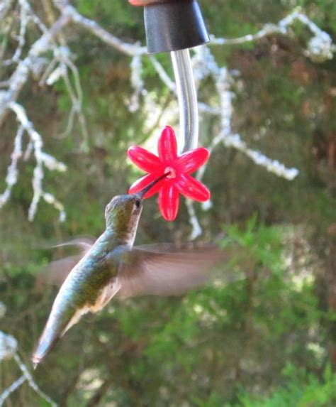 hummingbird feeder stopper feeders hummingbird feeder and stoppers with flower