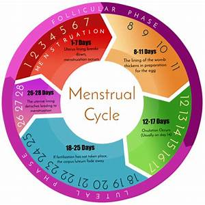 What Is A Menstrual Cycle