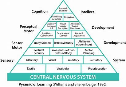 Pyramid Sensory Learning System Processing Development Background