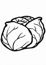 Coloring Cabbage Pages Vegetable sketch template
