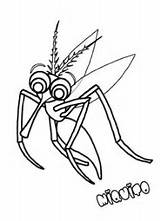 Coloring Mosquito Pages Mosquitoes sketch template