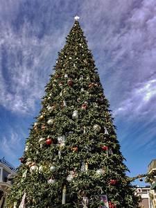 Outdoor, Christmas, Tree, Free, Stock, Photo
