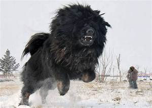 Skeptophilia: Giant radioactive mutant dog attack!