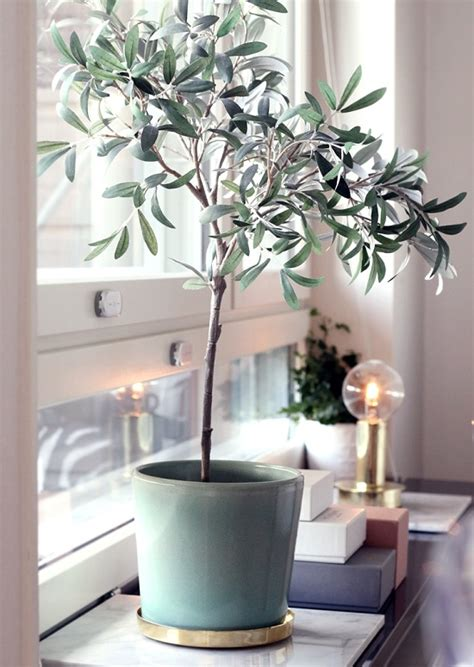 Best Indoor Window Plants by 33 Creative Ways To Include Indoor Plants In Your Home